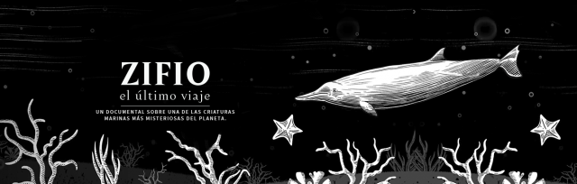 Banner-Meri-Zifio-1