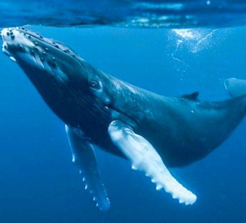 ballenas-1