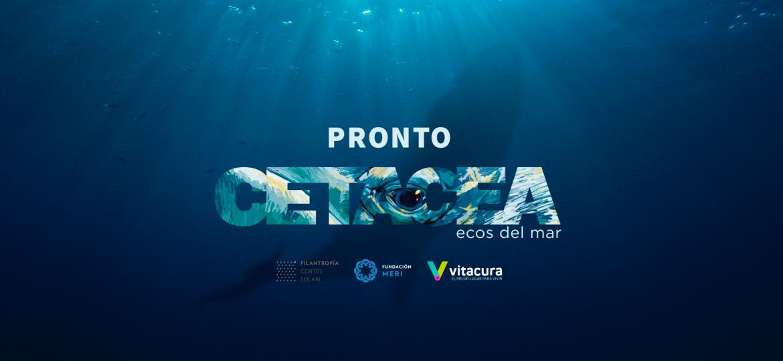 Banner-Cetacea